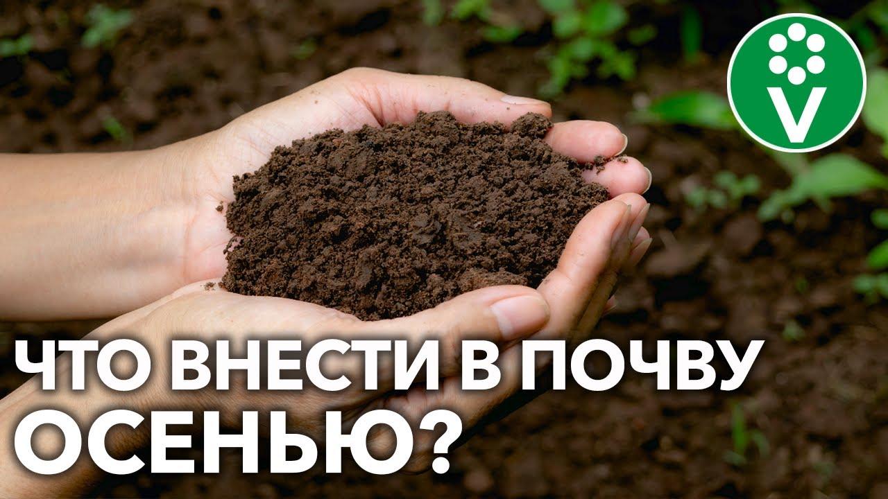ОБЕДНЕЛА ПОЧВА? ВОТ КАК ВОССТАНОВИТЬ ПЛОДОРОДИЕ для больших урожаев в следующем году!