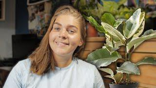 PLANT REVIVAL: Rubber Plant (Ficus Tineke)