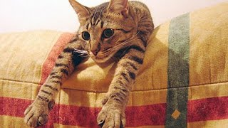 Смешное Видео с Кошками 2015! Самое лучшее! Забавные кошки. №4