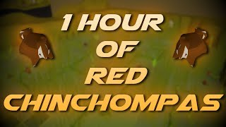 Hunting Red Chinchompas   Testing OSRS Wiki Money Making Methods