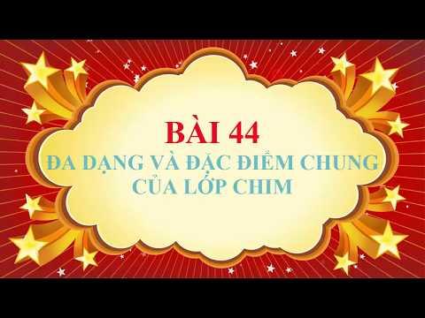 SINH 7-BÀI 44. ĐA DẠNG VÀ ĐẶC ĐIỂM CHUNG CỦA LỚP CHIM ( VIDEO CLIP) ( CÔ PHƯƠNG THỦY ĐĂNG)