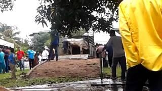preview picture of video 'Part 2 Sembelih Lembu Korban Masjid Jamik Bagan Ajam lembu mengamok'