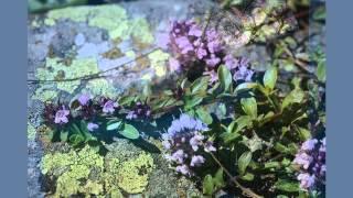 Mark Knopfler  Wild Mountain Thyme