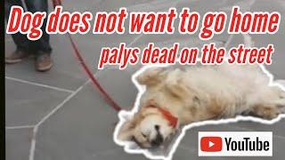 Dog doesn