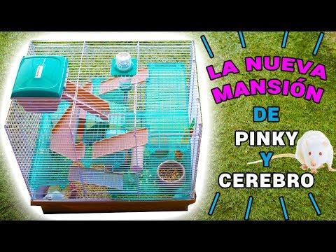 NUEVA MANSIÓN RATITAS DE LABORATORIO PINKY Y CEREBRO   El Gallinero de Mike