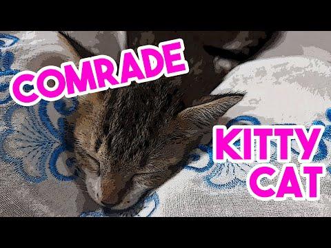 Kitty Cat Tale - Animal rescue in Vietnam