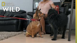 A Paralyzed Dog Makes a Friend | Dog: Impossible