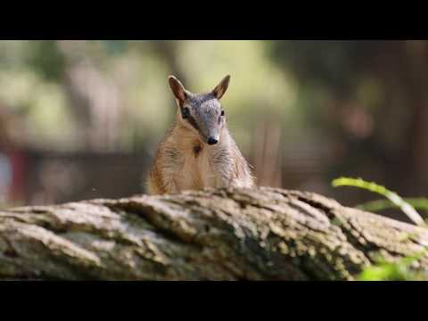Magical Land of Oz – Trailer