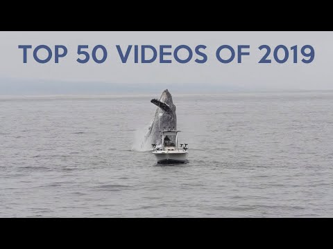 50 Most Popular Video Clips of 2019