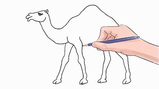 How to Draw a Camel Easy Step by Step