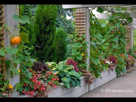 Trendige Garten Rankgitter Ideen