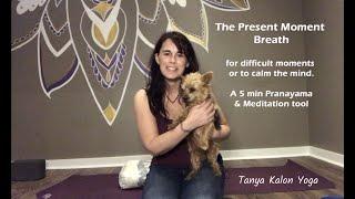 The Present Moment Breath  (5 min)