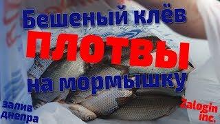 Https yandex ru рыбалка в могилеве