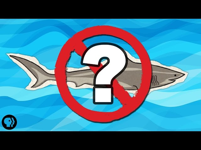 What If There Were No Sharks?