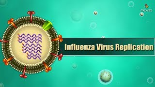 Influenza virus replication Cycle Animation - Medical Microbiology USMLE step 1
