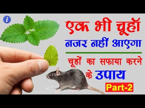 घर से चूहे भगाने के घरेलू उपाय | By Ishan
