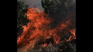 """Breaking: """"Amazon Jungle On Fire"""" """"Magma Rising"""""""
