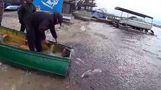 Вісім двадцятикілограмових товстолобів врятували з браконьєрських сіток на Тернопільському озері