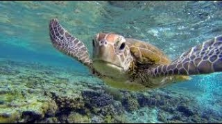 The Great Barrier Reef of Australia - Underwater Life Great Barrier Coral Reef (HD)