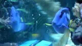 AquaGenesis International - The RoboSnail2.flv