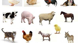 Apredemos los animales domésticos prueba léxico semántica