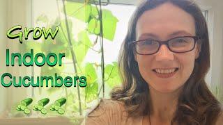 Growing INDOOR Cucumbers on your WINDOWSILLS!!!