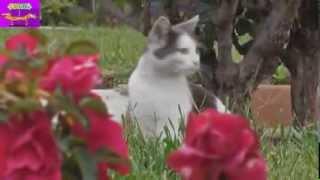 Приколы! Лучшая  подборка смешных ситуаций с котами, февраль 2014 ! Часть 2 Funny Pets Compilation