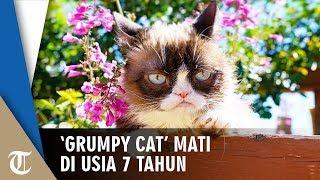 'Grumpy Cat' Kucing yang Wajah Cemberutnya Viral di Internet Dinyatakan Mati di Usia 7 Tahun