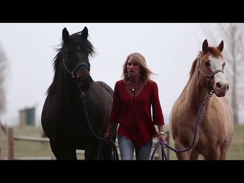 International Horse Certification Course with Business Training ...