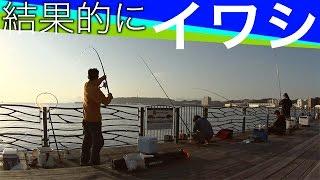 結果的に101匹イワシちゃん大行進!Surf-fishing