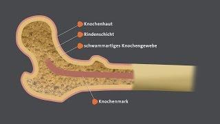 Gambar cover Knochen - Haltung und Bewegung | alpha Lernen erklärt Biologie