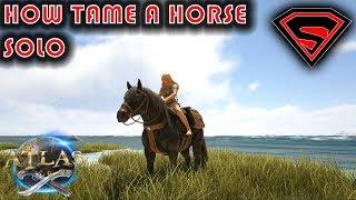 horse breeding atlas - Video vui nhộn, Clip hài hước