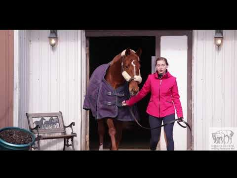 Why I took Equine Guelph Online Courses? - YouTube