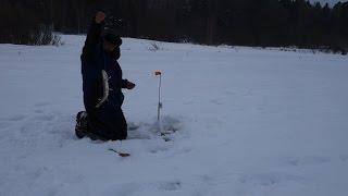 Ловля на жерлицы в подмосковье зимой