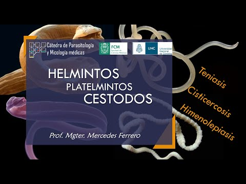 Platyhelminthes coelomate vagy acoelomate