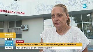 Питбул нахапа жестоко 10-годишно дете в Самоков - Здравей, България (02.08.2021)