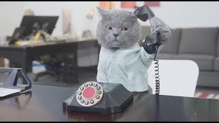 Pet Peeves - Office Edition - Video Youtube
