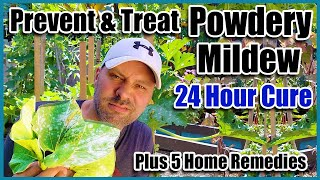 Prevent & Treat Powdery Mildew and 5 Home Remedies That Really Work!!
