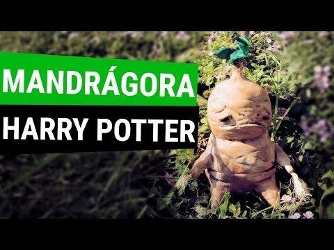 Blog de littlezombie - Mandragora decoracion ...