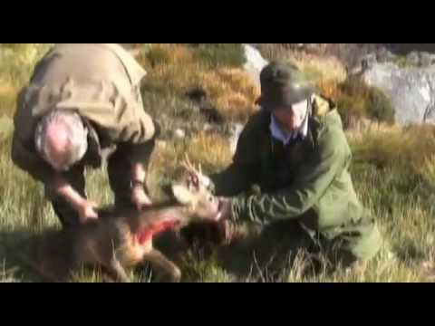 Fieldsports Britain – Stalking at Balmoral and Snipe in Wales – episode 5
