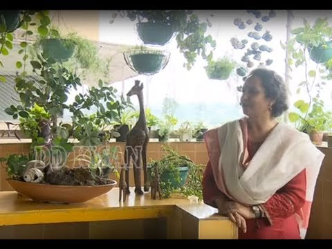 Chatt Par Baghwani - Learn Potting &amp Repotting with Expert Radhika Anand