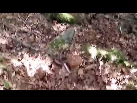 Olio essenziale da funghi su una gamba