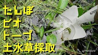 めだかさんのビオトープ「たんぼビオトープ作り土水草採取」Crepe's Biotope