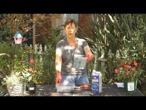 How to Add Epsom Salt & Coffee Grounds to Potting Soil : Garden Space