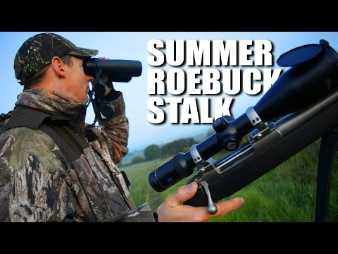 Summer Roebuck Stalk