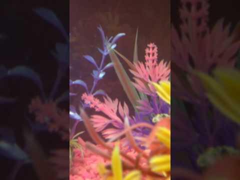 Lunas para magkaroon ng amag laban kuko halamang-singaw