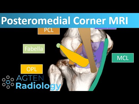 Structura articulației genunchiului