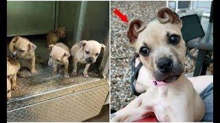 Тощих щенков нашли на улице… У одного из малышей что-то творилось с ушами