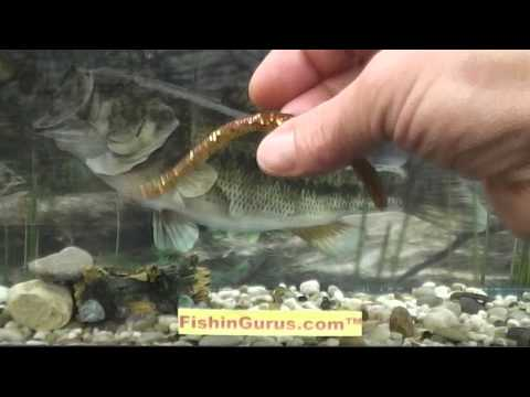 Jackall Flickshake 5.8″ Cinnamon Wacky Fishing Worm Review by FishinGurus Chicago Bait Tackle Shop