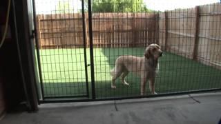 The Pet Ranch Video Tour